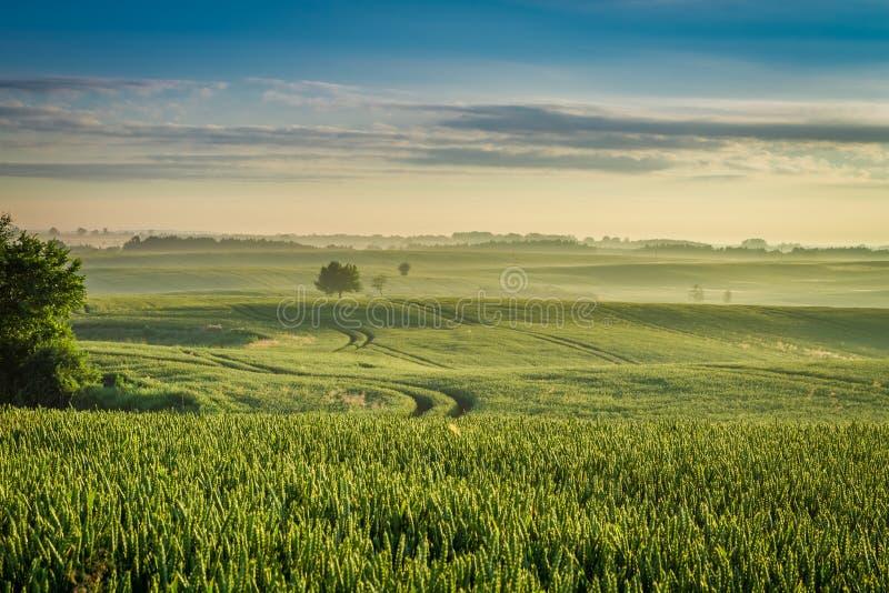 Amanecer frío y reservado en el campo de niebla en primavera imagenes de archivo