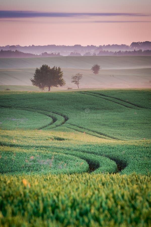 Amanecer hermoso en el campo verde en verano, Polonia fotos de archivo libres de regalías