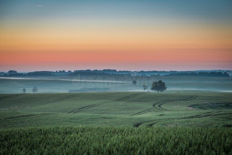 Amanecer maravilloso en el campo de niebla en verano imágenes de archivo libres de regalías