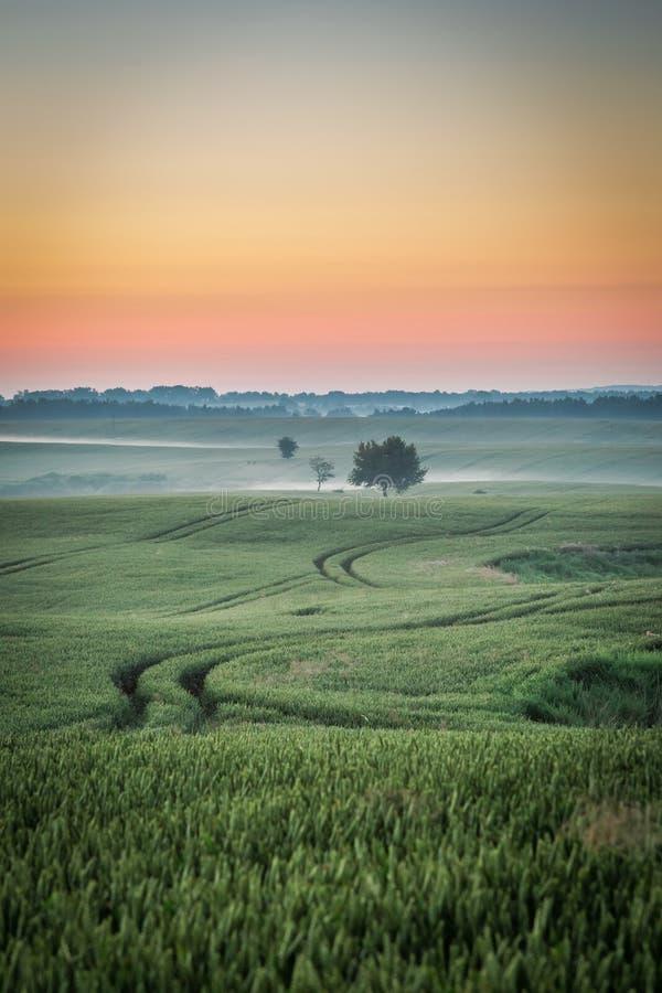 Amanecer maravilloso en el campo verde de niebla en verano fotos de archivo libres de regalías