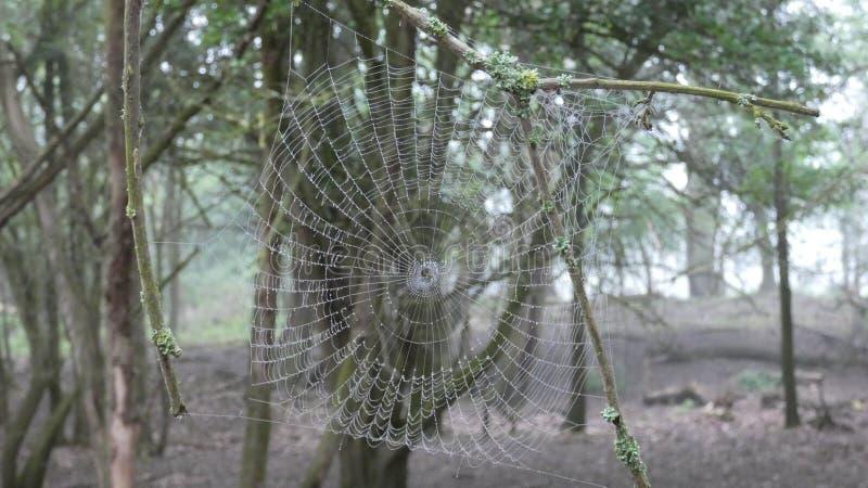 Amanhecer da Web de aranhas na floresta 6 fotografia de stock royalty free