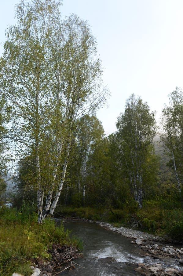 Amanhecer em um rio Yarovka da montanha em Sibéria ocidental imagem de stock