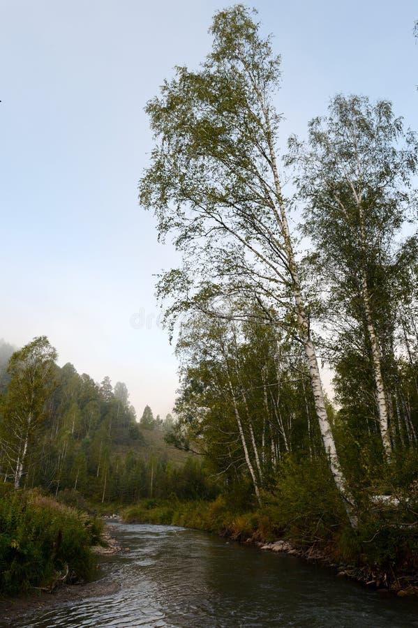 Amanhecer em um rio Yarovka da montanha em Sibéria ocidental fotografia de stock