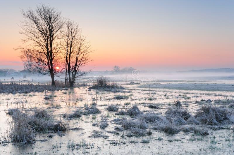 Amanhecer gelado sobre um prado enevoado e pantanoso com água congelada e uma árvore só foto de stock royalty free
