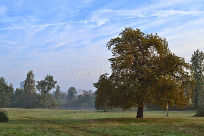 Amanhecer Hyde Park London fotos de stock royalty free