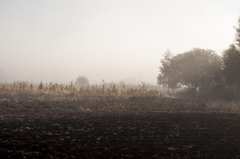 Amanhecer no campo com névoa do outono e gotas da água no ar Matizes do marrom Nada podia considerar longe Beauti imagem de stock royalty free