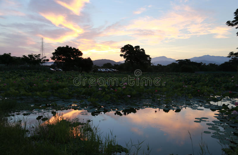 Amanhecer por Lotus Pond fotografia de stock
