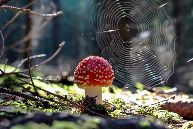 Amaniet het groeien in het bos royalty-vrije stock afbeeldingen