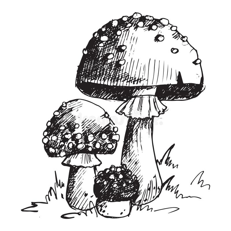 Amanita fly agaric toadstool mushrooms fungus different art style design vector illustration red hat. On white background. Harvest cooking healthy vegetarian stock illustration
