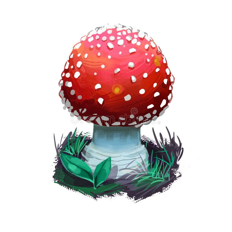 Free Amanita Muscaria Or Fly Agaric Mushroom Closeup Digital Art Illustration. Conspicuous Boletus Has Red Cap With White Royalty Free Stock Photo - 209166925