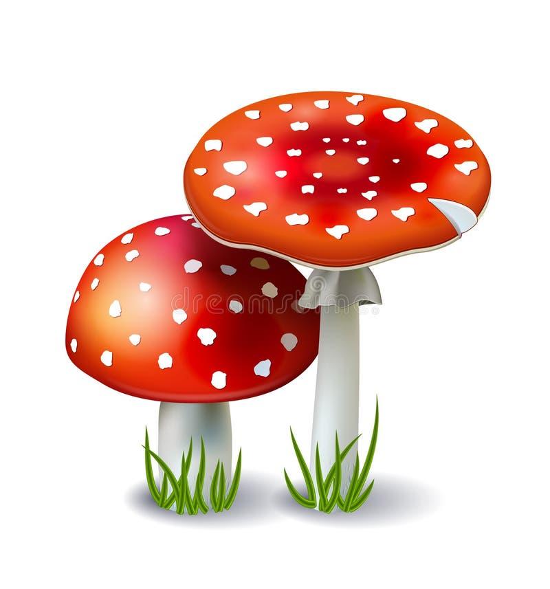 Amanita vermelho do cogumelo ilustração stock
