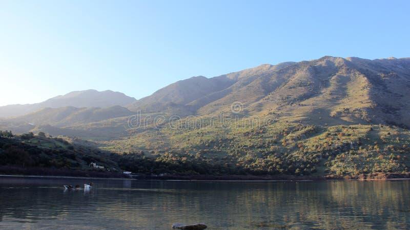 Amante de la libertad del ganso de fauna en el lago nature fotografía de archivo libre de regalías
