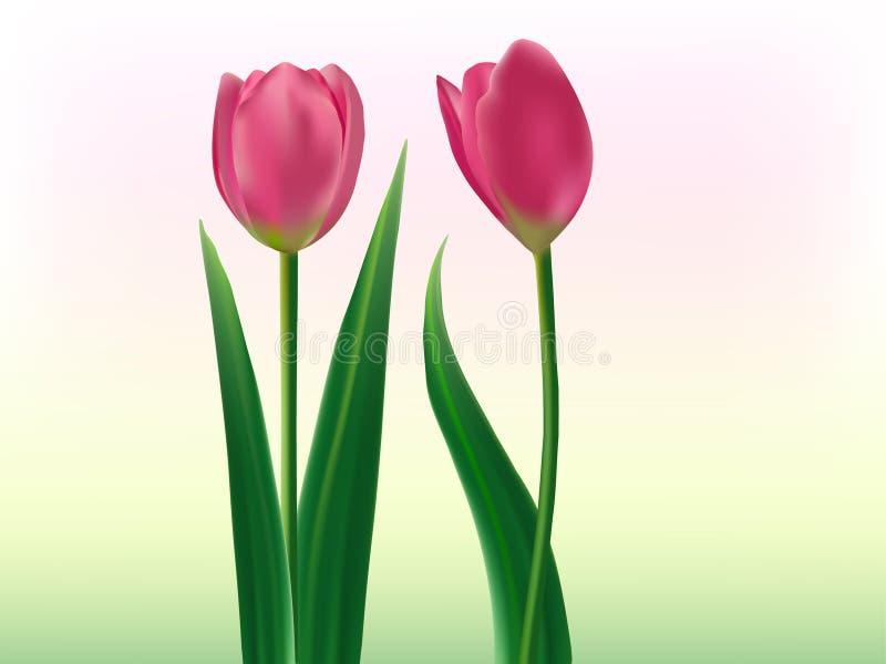 Amante de los tulipanes ilustración del vector