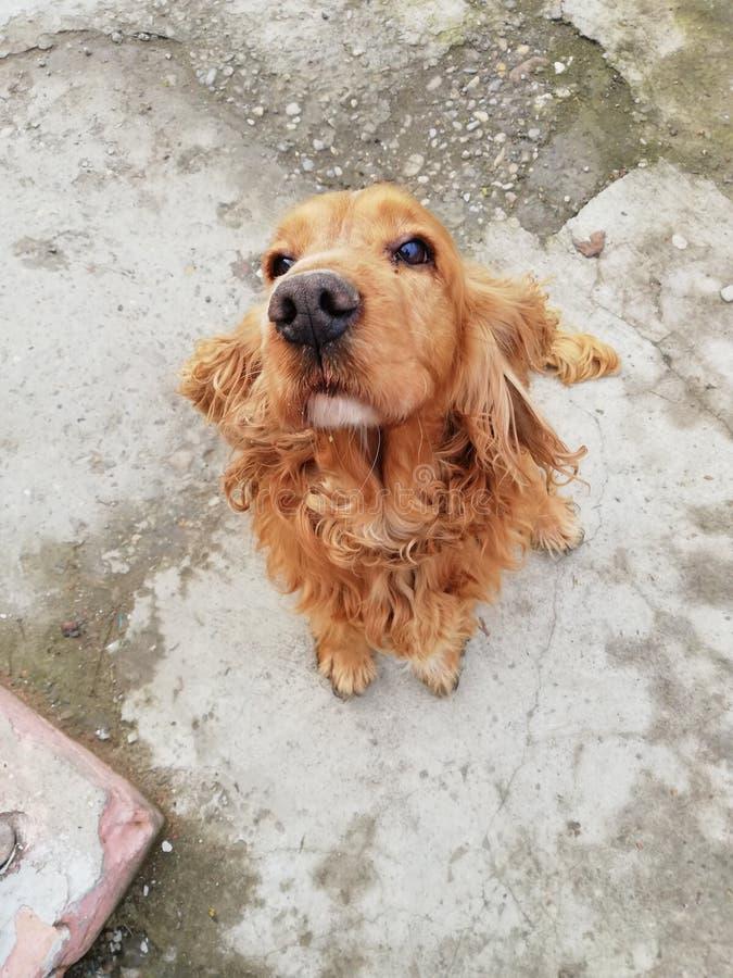 Amante dei cani immagine stock