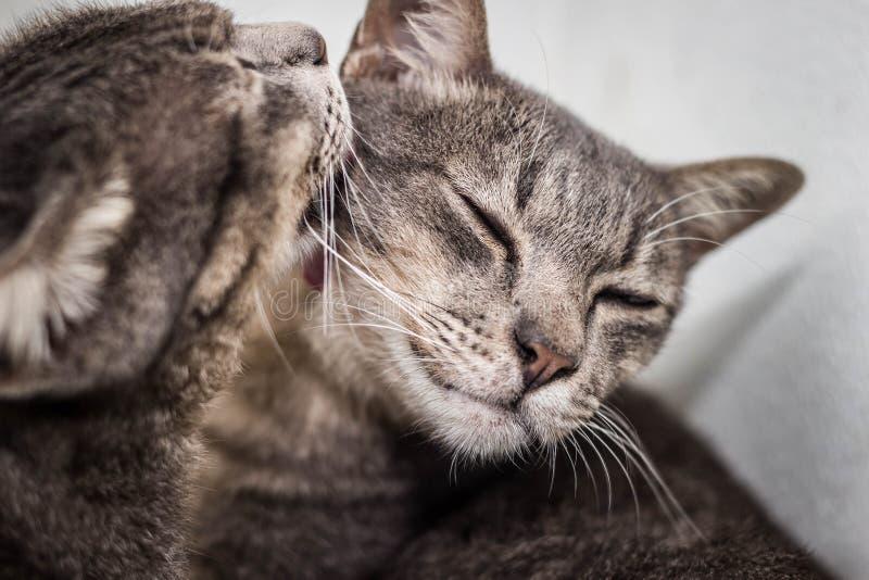 Amante del gato imagen de archivo