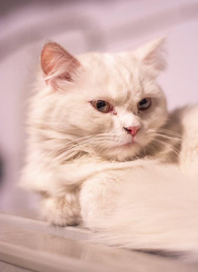 Amante do animal de estimação do furr dos animais dos gatos feliz foto de stock royalty free