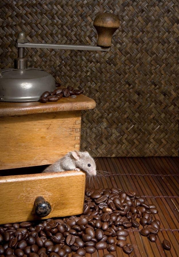 Amante do café fotografia de stock
