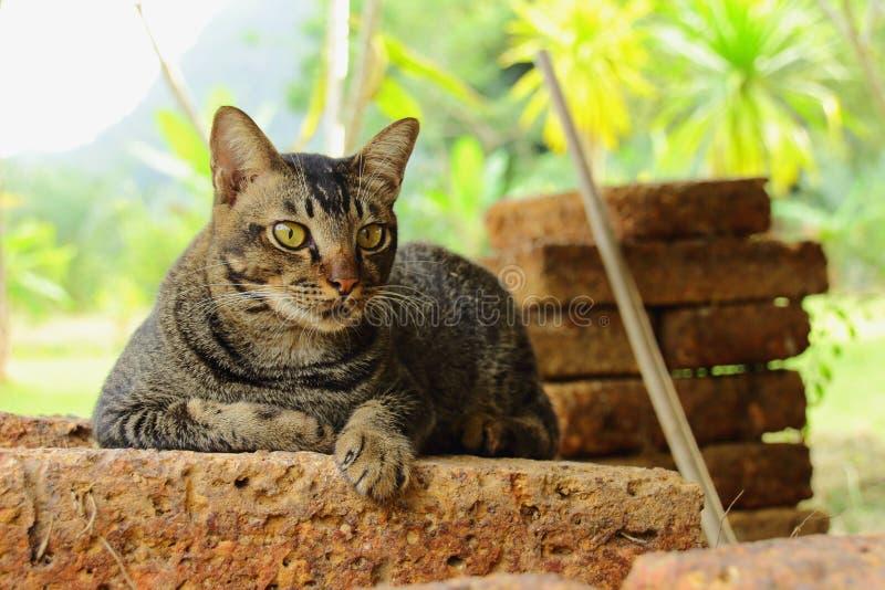 Amante do gato, gato nas rochas fotos de stock