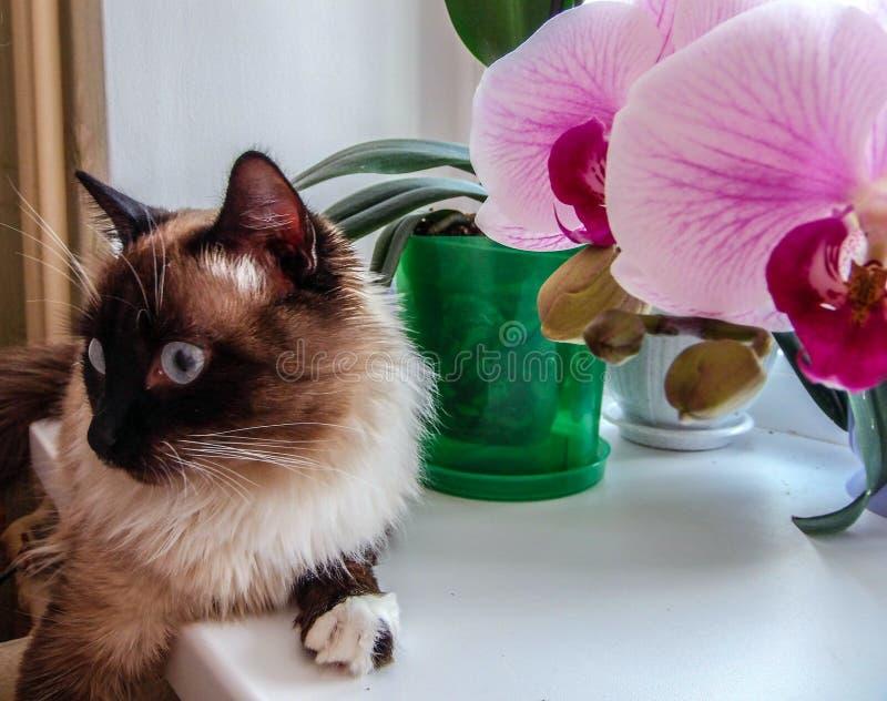 Amante mullido del amigo y de la orquídea imagen de archivo