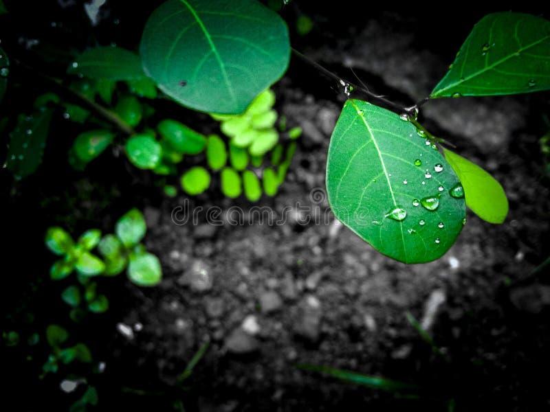 Amante verde imagen de archivo libre de regalías