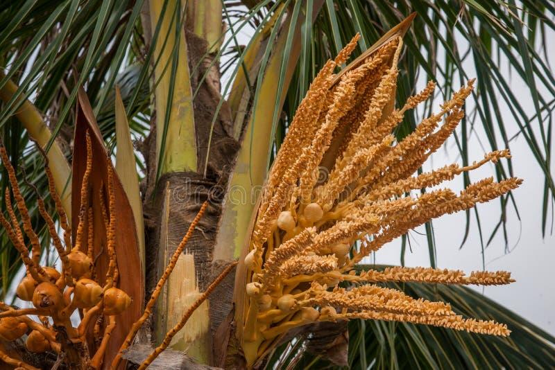 Amantes de la flor del coco de la playa de Zhuhai City Road imagen de archivo
