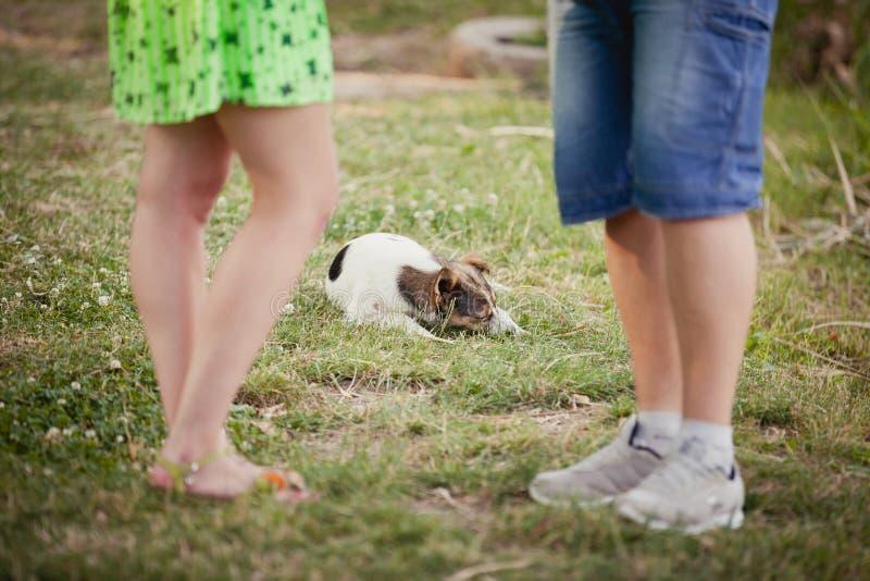 amantes e um cão na caminhada do verão fotografia de stock royalty free