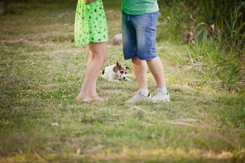 amantes y un perro en paseo del verano fotos de archivo