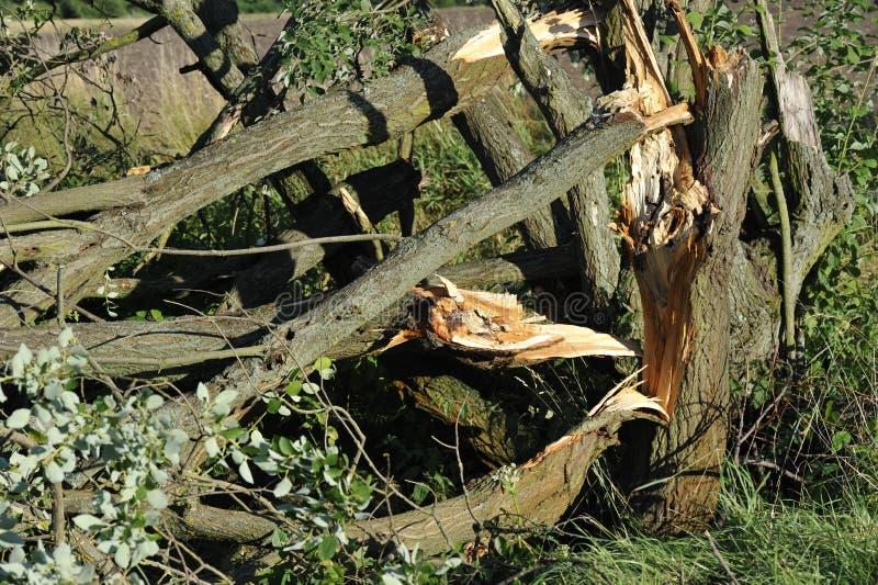 łamany drzewo