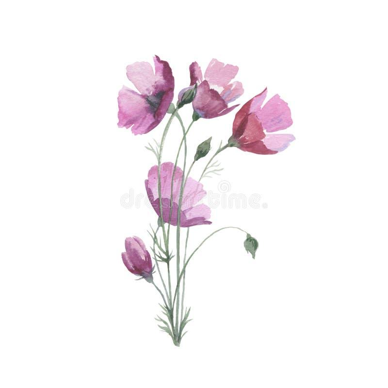 Amapola de la flor del Wildflower en un estilo de la acuarela aislada ilustración del vector