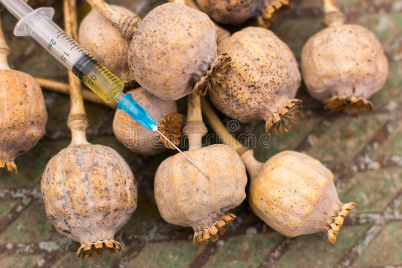 Amapola de opio de la droga dentro de la jeringuilla Drogadicción mortal imagenes de archivo