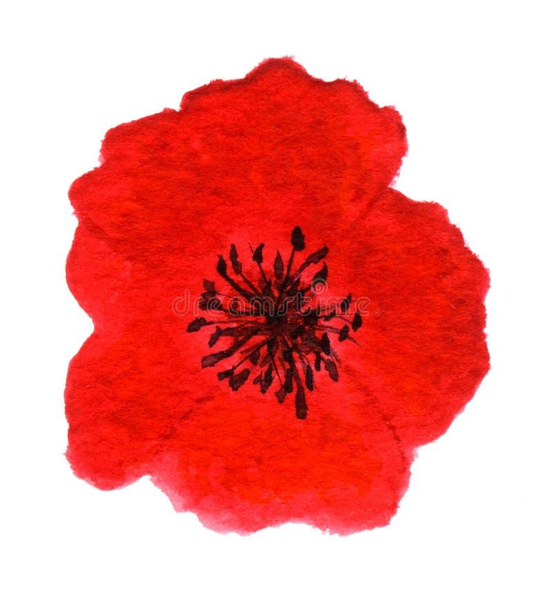 Amapola roja brillante ilustración del vector