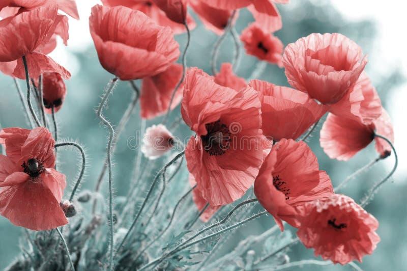 Amapola roja brillante fotografía de archivo