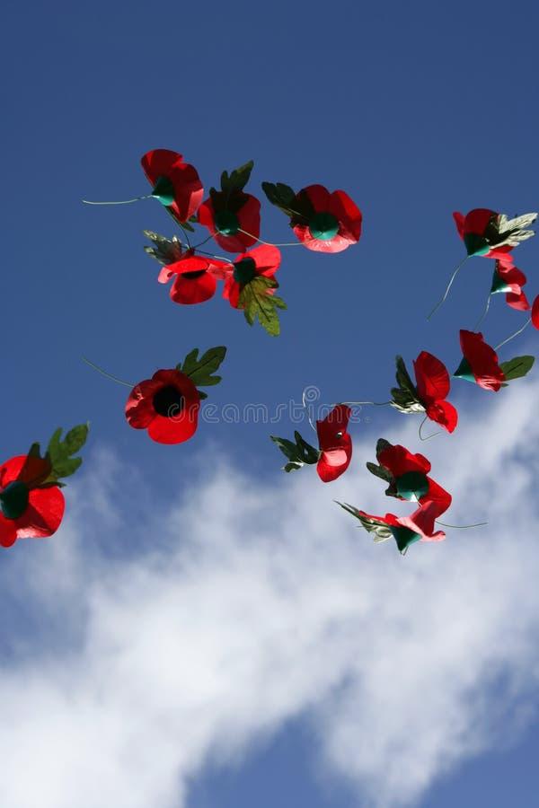 Amapolas de la conmemoración en el cielo imagen de archivo libre de regalías