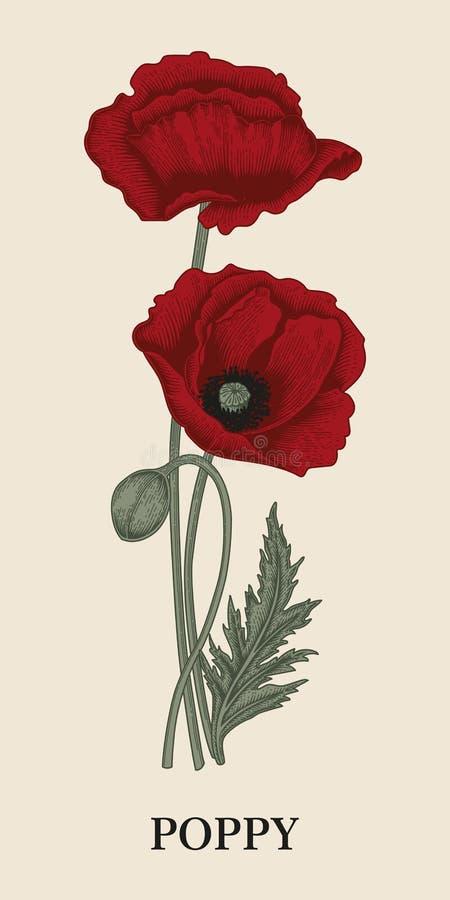 Amapolas Flores Ejemplo del vector en estilo del vintage libre illustration