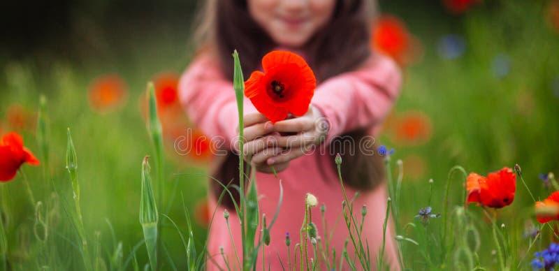 Amapolas rojas en las manos de una muchacha imágenes de archivo libres de regalías