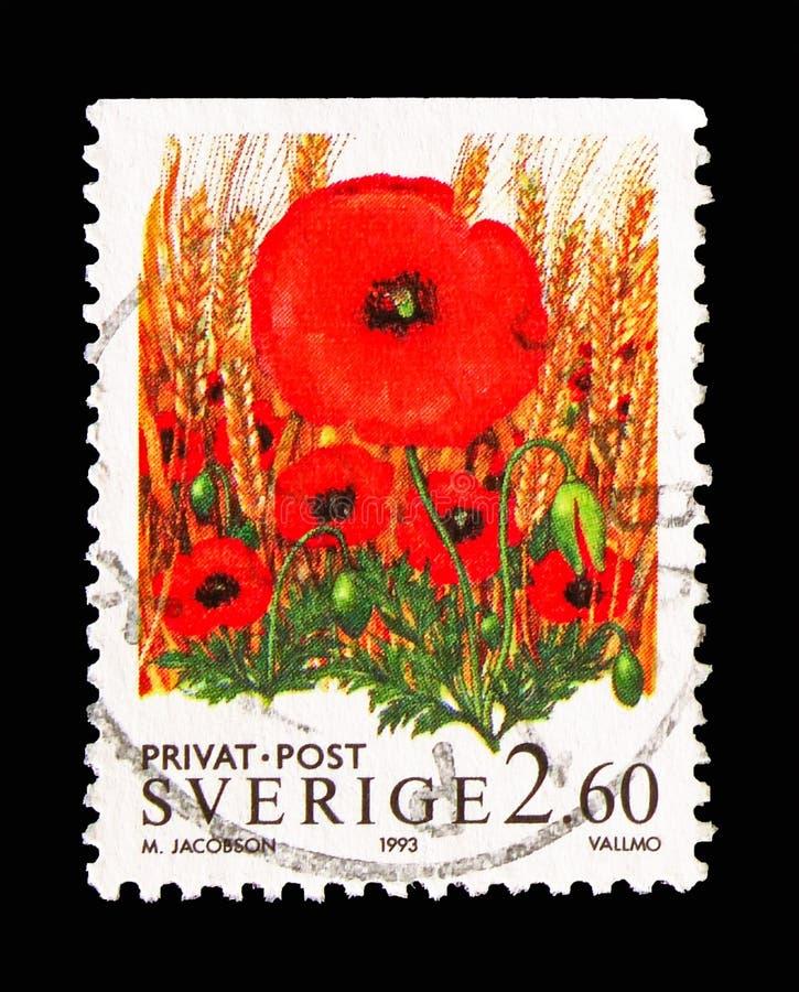 Amapolas, sellos de la rebaja - flores, serie, circa 1993 imagen de archivo