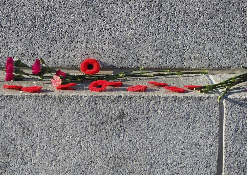 Amapolas y claveles para el día de la conmemoración imagen de archivo libre de regalías