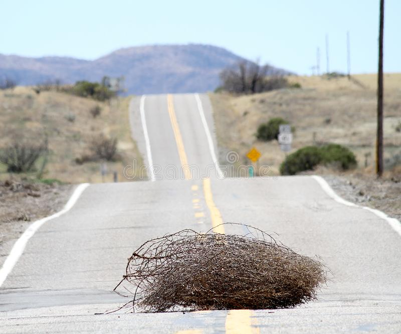Amarant in Arizona lizenzfreies stockbild