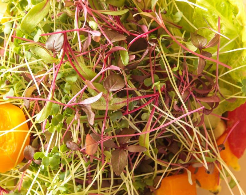 Amarant, biet, en broccoli microgreens in een plantaardige salade royalty-vrije stock foto's