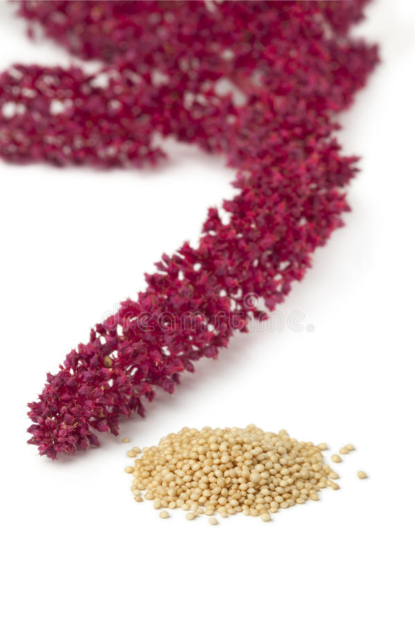 Amaranth flowers and seeds. On white background stock photos