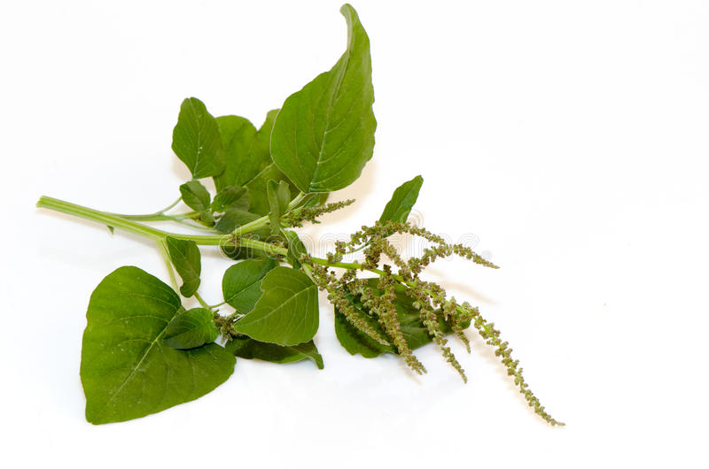 Amaranth, Green Amaranth. Vegetables or weeds that are beneficial to the body royalty free stock images