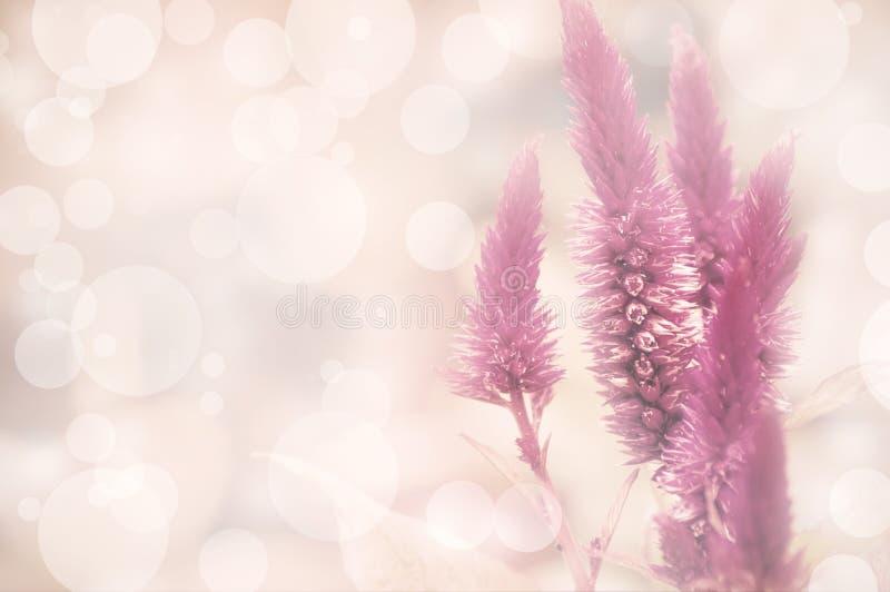 Download Amaranthus Stock Image - Image: 38719521