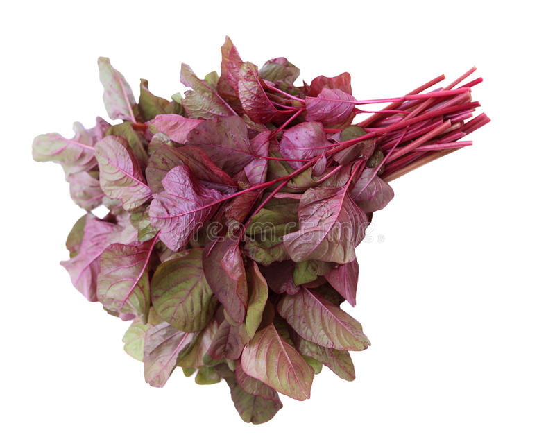 Download Amaranthus Tricolor stock image. Image of food, cook - 26245541