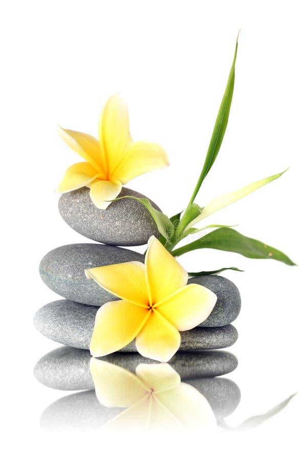 Amarele flores em pedras empilhadas fotos de stock royalty free