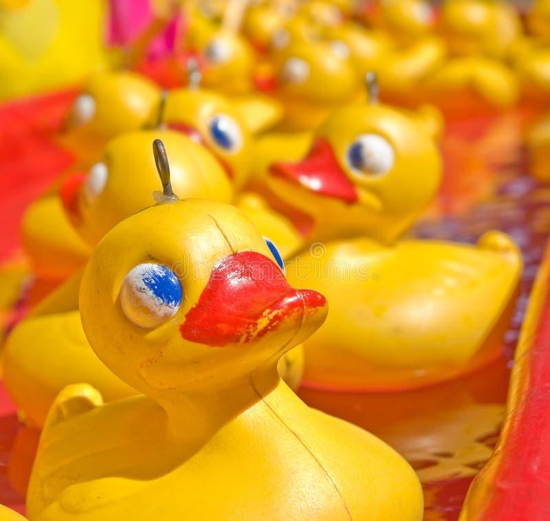 Amarele o pato fotografia de stock royalty free
