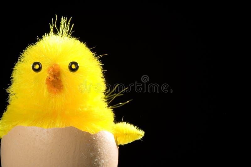 Amarele o pintainho aninhado no ovo fotografia de stock royalty free