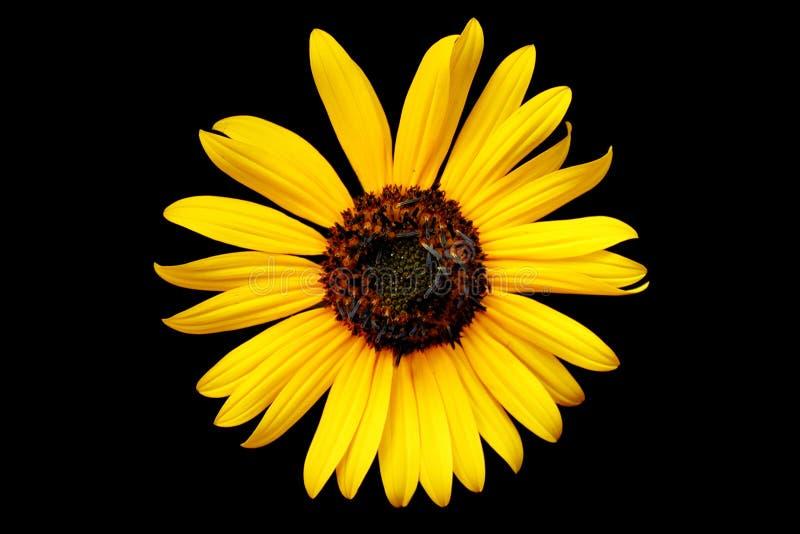 Amarele o wildflower fotos de stock