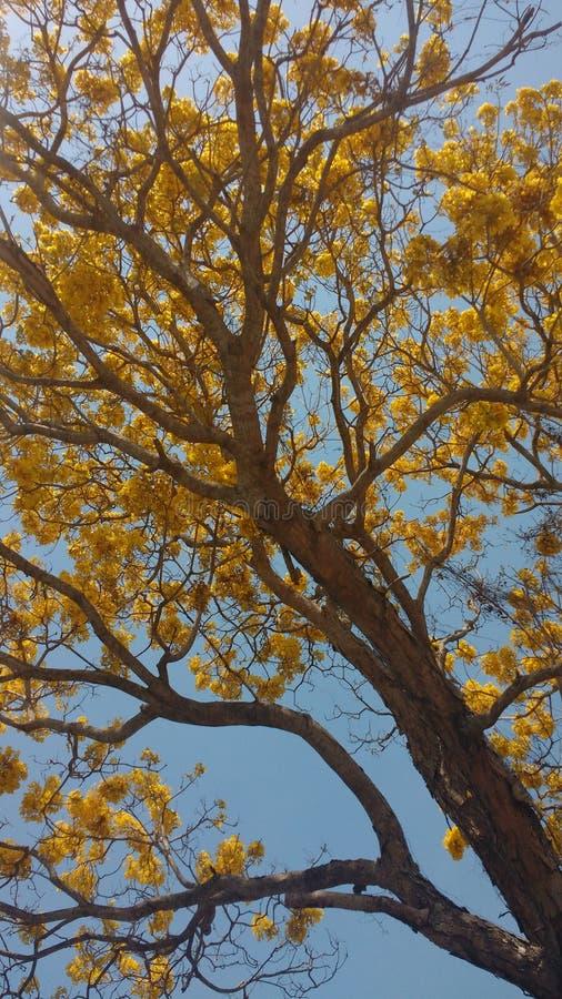 Amarelo da mola fotografia de stock royalty free