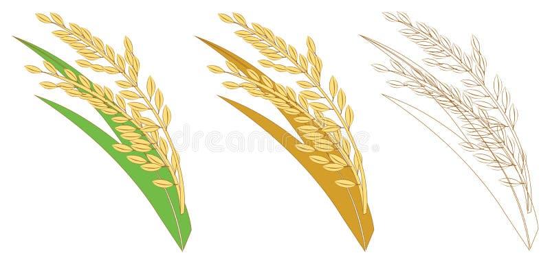 Amarelo do ouro do arroz ilustração royalty free