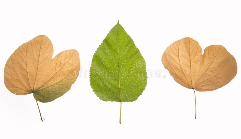 Amarelo do verde das folhas de outono nostalgy imagens de stock